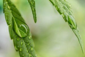 disfunzione erettile cannabisfn
